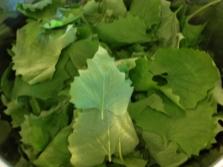 Листья чесночницы для некоторых блюд