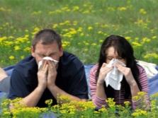 Масло черного тмина при аллергии