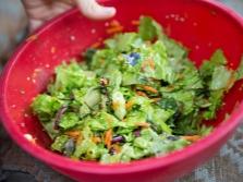 Салат с огуречной травой