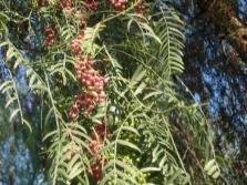 Ветви перечного дерева