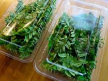 Заготовка листьев сансё