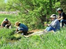 Фасовка и сбор водяного кресса