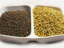 Семена сарептской горчицы коричневые и желтые