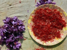 Кашмирский шафран