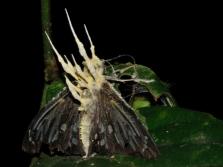 Кордицепс паразитирует на бабочках