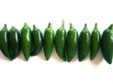 Сорт халапеньо espinalteco