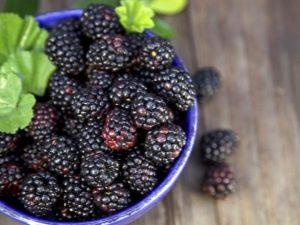 Черная малина: польза и выращивание