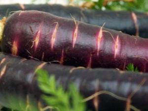 Фиолетовая морковь: состав, сорта и их применение