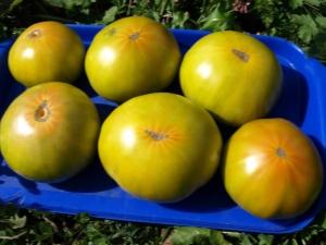 Характеристика и посадка сорта томата «Малахитовая шкатулка»