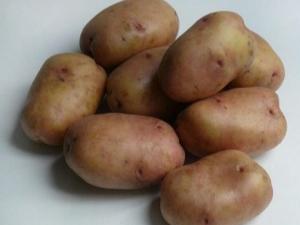 Характеристика сорта и выращивание картофеля «Ажур»