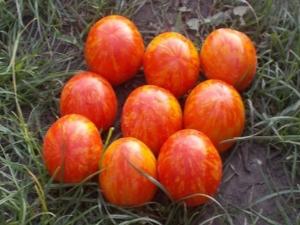 Характеристики ампельного томата «Тигровый»