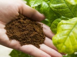 Как использовать кофейную гущу для растений?