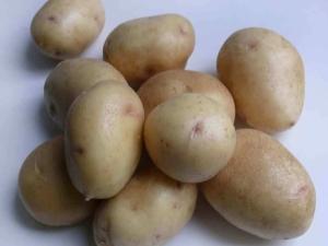 Как вырастить картофель сорта «Невский»?