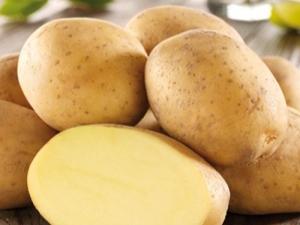 Картофель «Импала»: особенности и процесс выращивания