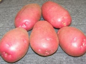 Картофель «Каменский»: описание сорта и выращивание