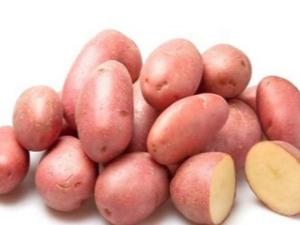 Картофель «Розалинд»: характеристика, посадка и уход