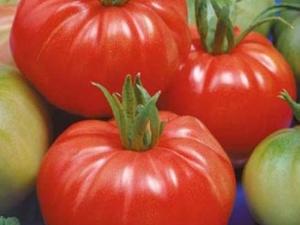 Особенности и тонкости выращивания томатов «Добрыня Никитич»