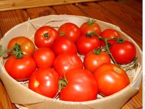 Особенности сорта томатов «Санрайз F1»