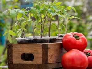 После каких культур можно сажать помидоры?