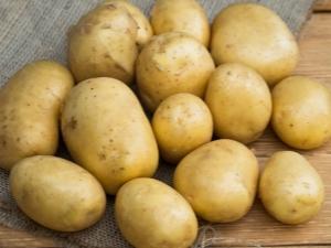 Техника выращивания картофеля «Голубизна»
