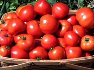 Томат «Ирина F1»: описание сорта и правила выращивания