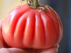 Томат «Сто пудов»: характеристика и процесс выращивания