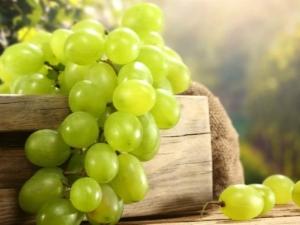 Зеленый виноград: сорта, польза и вред