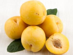 Желтая слива: сортовое разнообразие, агротехника и свойства плодов