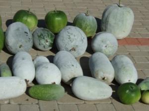 Зимняя сладкая тыква: особенности, сорта и выращивание