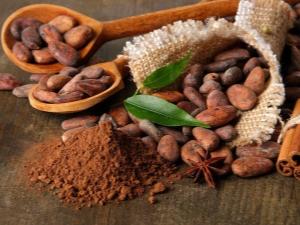 Какао-бобы: свойства и сферы применения