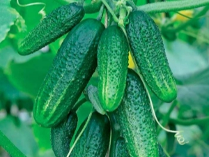 Какие овощные культуры можно сажать после огурцов?