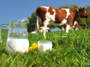 Калорийность и БЖУ молока на 100 г