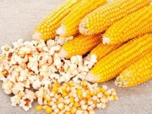попкорн из какой кукурузы