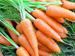 Морковь «Шантане»: особенности, виды и тонкости выращивания