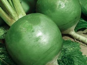 Редька «Маргеланская»: свойства и выращивание
