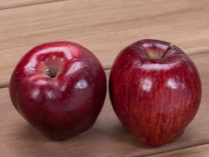 """Яблоня """"Ред Делишес"""": описание, калорийность и выращивание сорта"""
