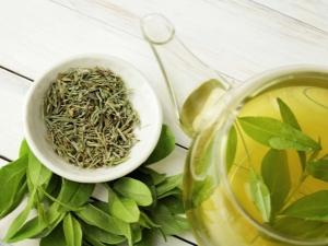 Зеленый чай повышает или понижает давление?
