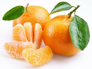 Как привить мандарин в домашних условиях?