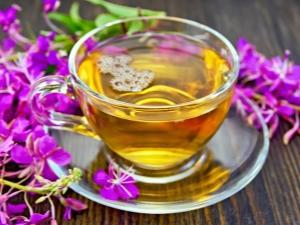 Лечебные свойства и противопоказания иван-чая для мужчин