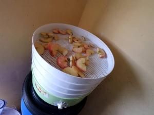 Сушилка для яблок: как выбрать и изготовить?