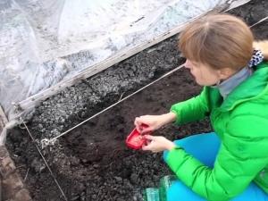 Тонкости подготовки семян огурцов к посадке в открытый грунт