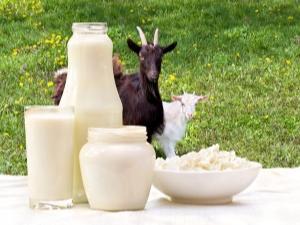 Все о козьем молоке
