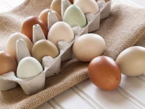 Цвет скорлупы яиц: от чего он зависит