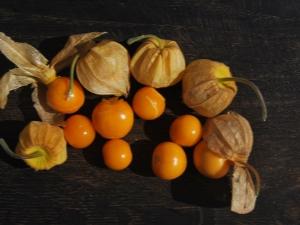 Ягодный физалис: сорта, выращивание и уход