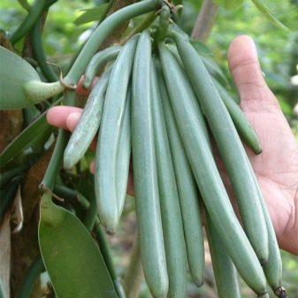 Польза и вред ванилина для здоровья