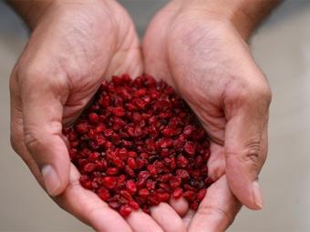 Сухие ягоды барбариса