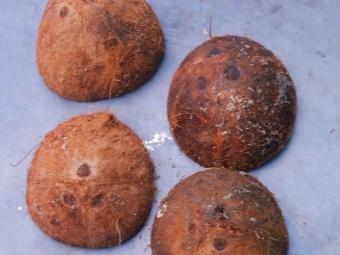 Сушка оболочки от кокосов