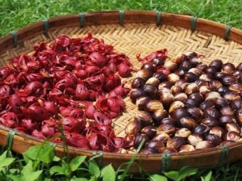 Мускатный орех и мускатный цвет