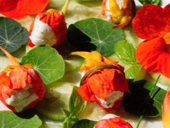 Фаршированные цветы настурции
