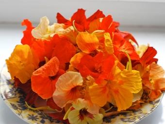 Цветы настурции